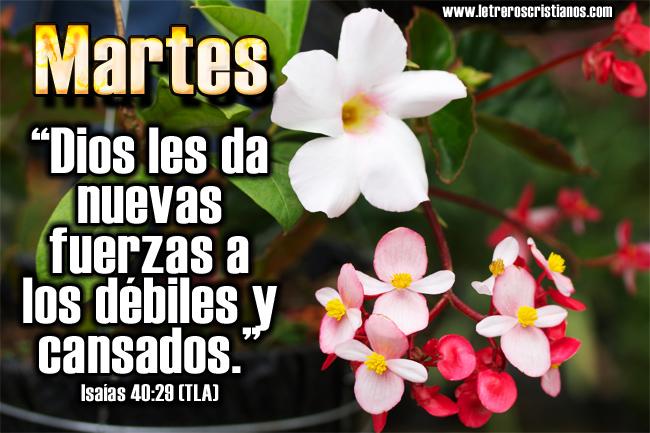 Martes-Isaias-40-29
